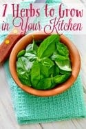 7 Herbs You Can Grow in Your Kitchen