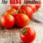 How to Grow Tomatoes { How to Grow Tomato Plants }