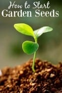 How to Start Garden Seeds