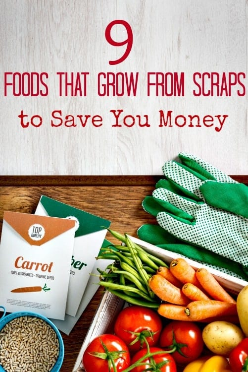 Don't throw your vegetable scraps away! These 9 foods that grow from scraps can help save you money, feed your family fresh veggies and more! They're perfect for beginner gardeners to learn with too!