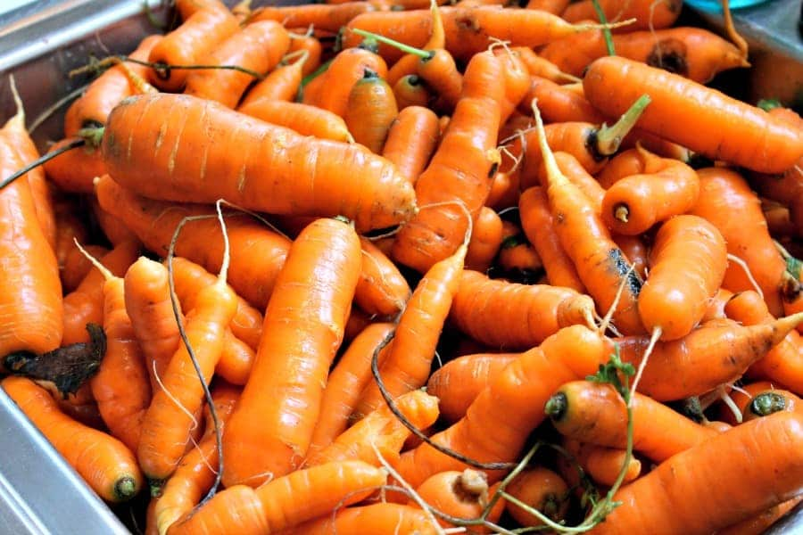 Learning how to can your own foods? It's easy! Let me show you how to can carrots for long Term storage! You're sure to be shocked at how easy it is!