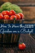 How to Have the Best Garden on a Budget