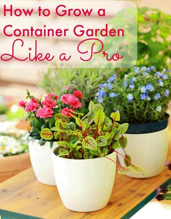 Thinking about starting a container garden? Read this first! I'll give you the secret to learning how to grow a container garden like a pro!