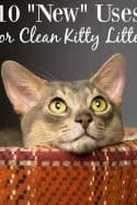 "10 ""New"" Uses for Clean Kitty Litter"