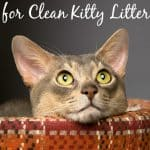 """10 """"New"""" Uses for Clean Kitty Litter"""