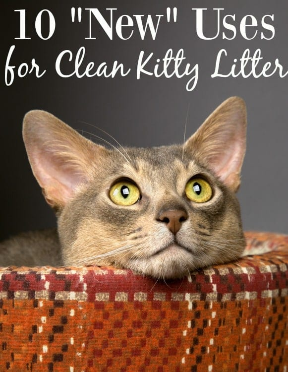 "Even if you don't have a cat, you should still keep kitty litter on hand! These 10 ""New"" Uses for Kitty Litter are all great and do NOT involve the cat!"