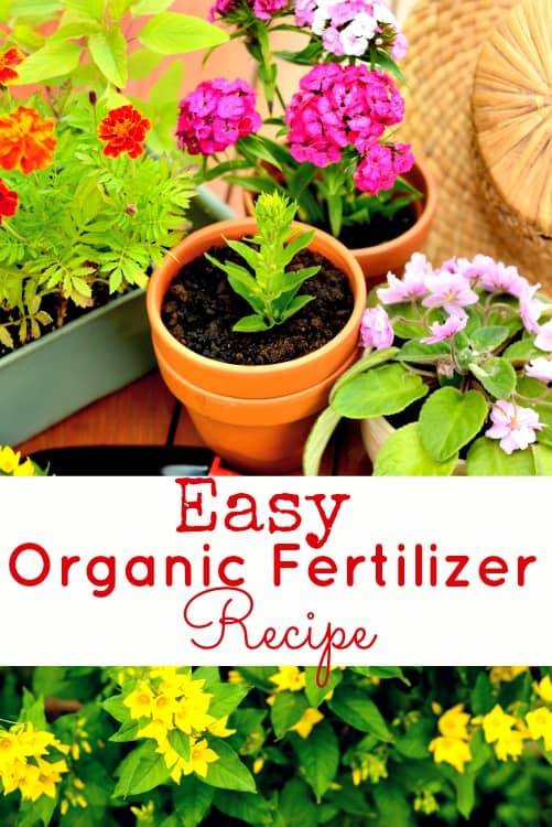 Don't buy chemical filled fertilizer for your garden! This homemade organic fertilizer recipe is easy to make and so much better for your plants!