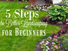 How to Landscape Your Yard –  5 Landscaping Tips for Beginners