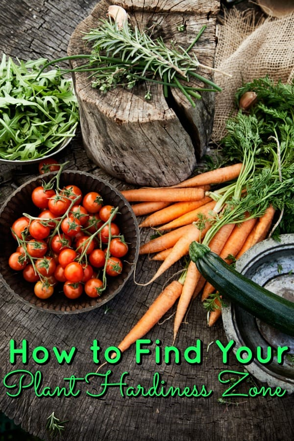 How to Determine Your Garden Zone - Planting a garden soon? Make sure you know which plant hardiness zone you live in! It really is the difference between a strong garden or a failed garden!