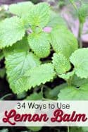 34 Ways to Use Lemon Balm