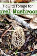 How to Forage for Morel Mushrooms