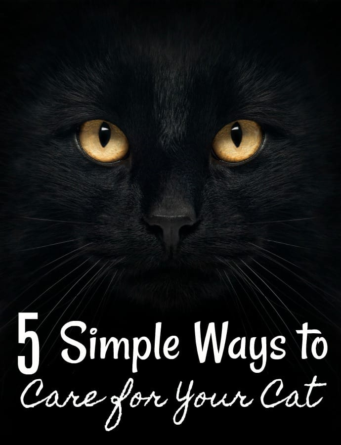5 Simple Ways to Care for Your Cat