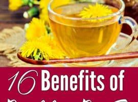 16 Benefits of Dandelion and Dandelion Root Tea