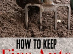 How to Remove Ants from Your Compost Pile -Have you found ants in your compost? Don't stress! Removing fire ants from your compost pile (or any type of ant really) is easier than you think! Let me show you how.