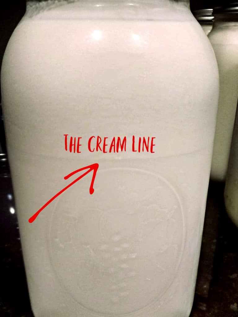 Fresh cream is one of the most decadent things you'll ever taste! It's also easy to get cream from milk. Let me show you the process of skimming cream from raw milk.
